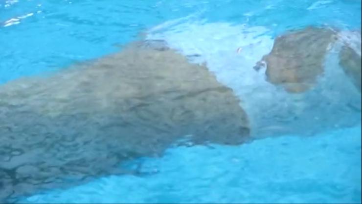 Kagami Kagami White Swimming Costume Image051