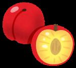 fruit_sumomo.png