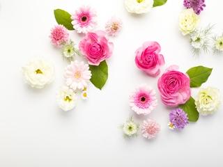 flower201261772_TP_V_R1.jpg