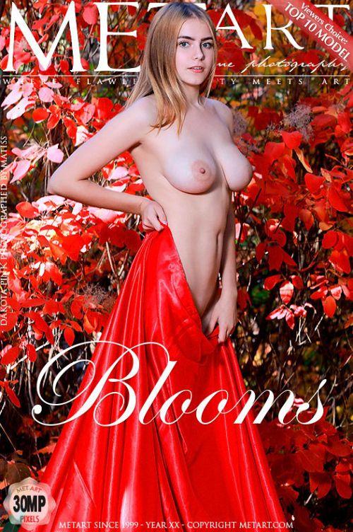 Dakota Pink - BLOOMS
