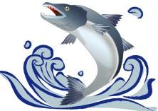 【悲報】ワイ 一匹六千円で買った鮭をいきなり焼き鮭にされ泣く