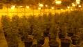伊勢崎市内の倉庫で大麻草266鉢を営利目的で栽培 ベトナム籍の男4人を逮捕